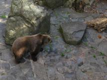 krumlov bear